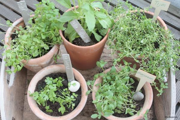 growing herbs on balcony