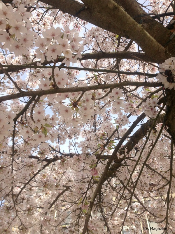 under the blossom tree