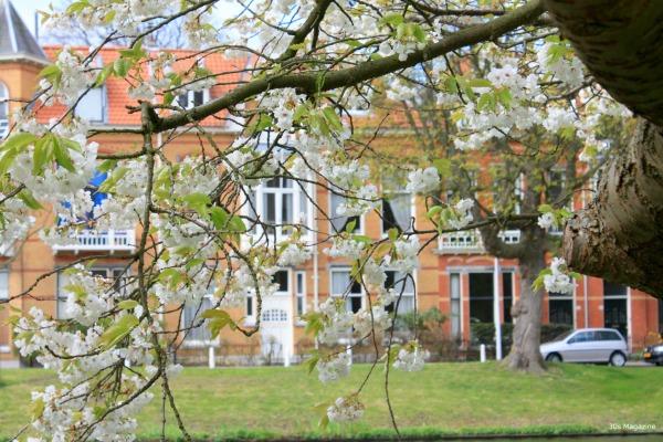 witte singel Leiden