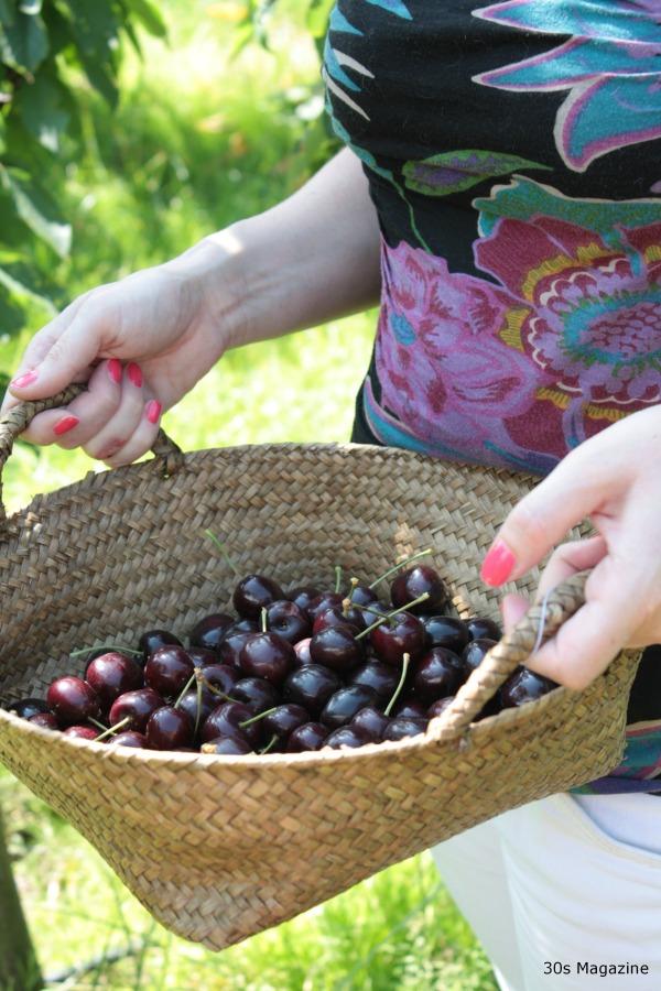 picked cherries