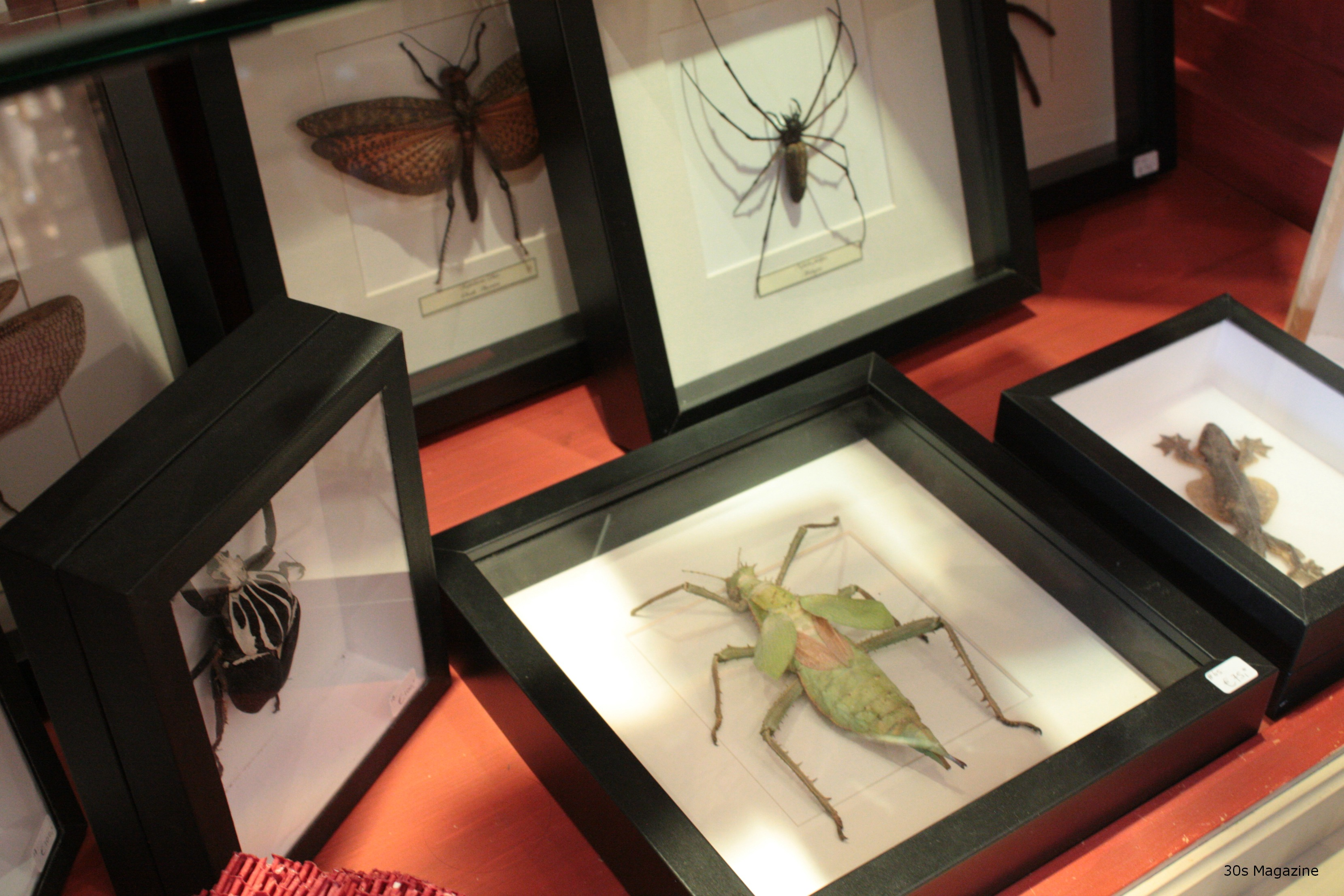 framed insects