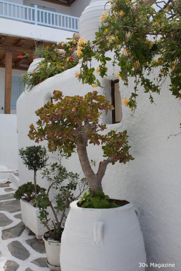 mykonos plants