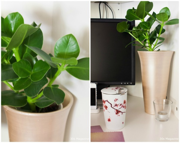 plants in the workspace
