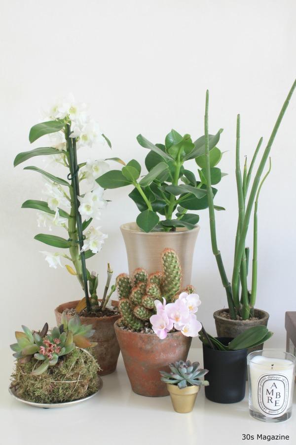 plants grouped