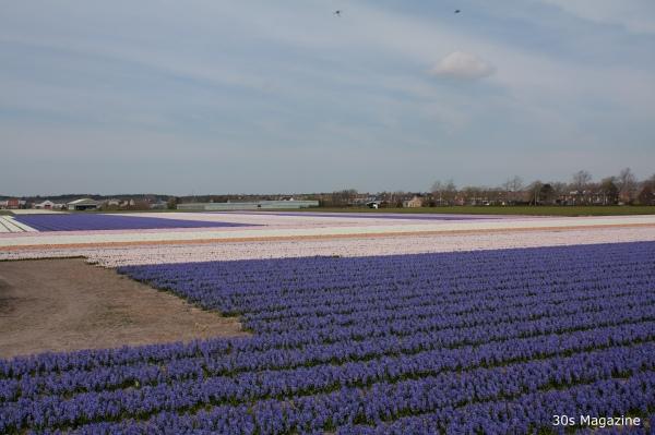 flower fields Holland