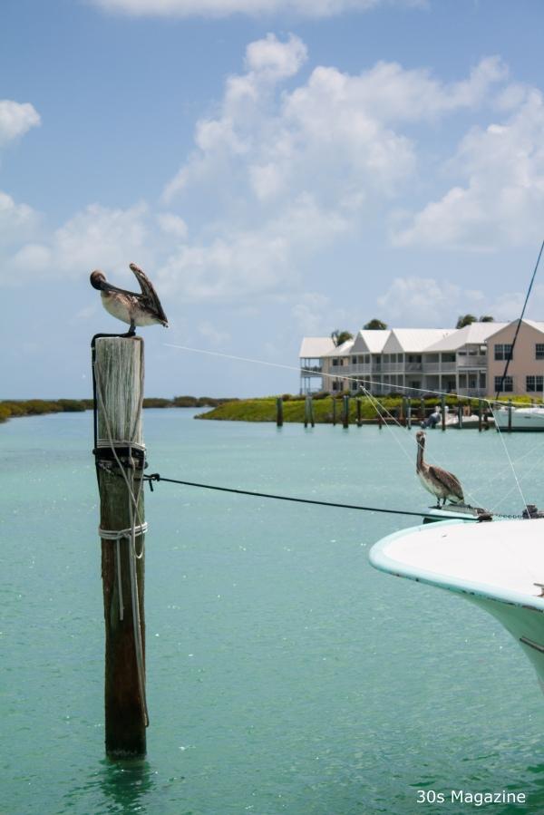 Duck Key marina